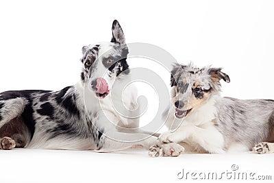 Happy dog white background - photo#22
