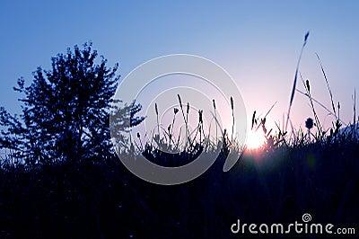 Blue morning Stock Photo