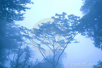 Blue morning in the forest with fog