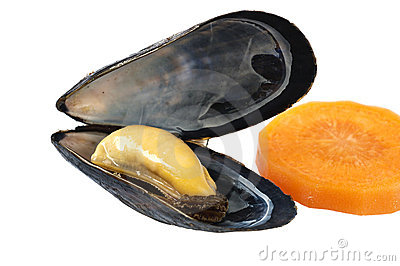 Blue mussel isolated on white background