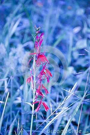 Blue nature grass background with red flower.