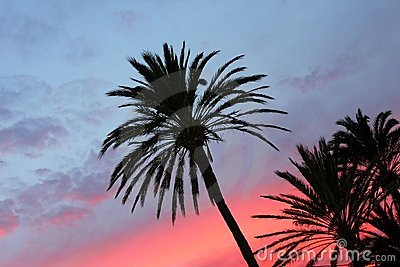 Blue and orange red sunset palm trees