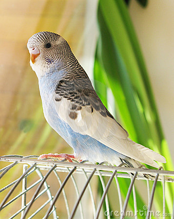 Free Blue Parrot Stock Image - 13494081