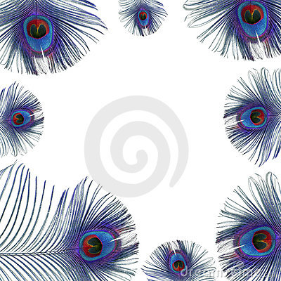 Free Blue Peacock Feathers Stock Images - 7161474