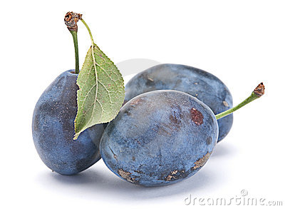 Blue plum with leaf