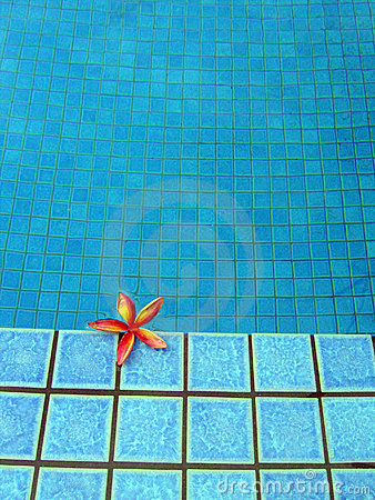 Blue resort swimming pool & red tropical flower