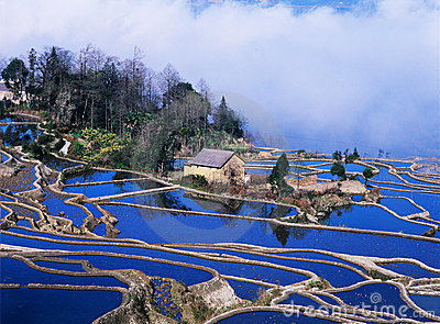 Blue rice terraces of yuanyang