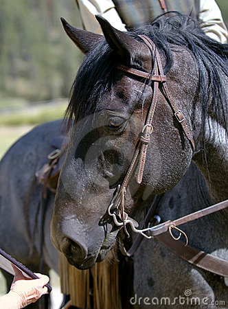 Blue Roan Horse Eyeing Reflector