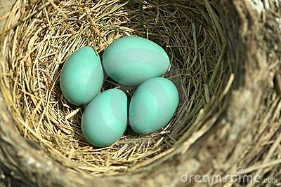 Blue Robin Eggs Bird Nest