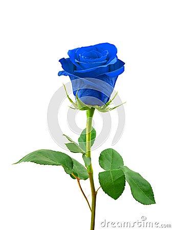 Free Blue Rose Stock Image - 9825771