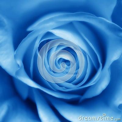 Free Blue Rose Bud Royalty Free Stock Photos - 570428