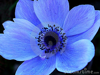 Blue Single Flower Macro Royalty Free Stock Photos - Image ... Leaves Clipart