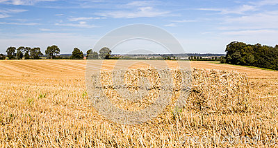 Blue skies over corn fields in England