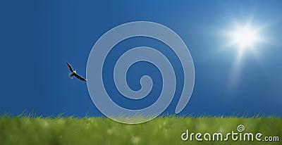 Blue sky and bird