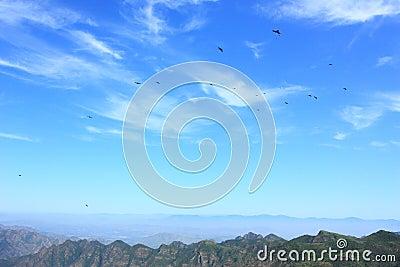 Blue sky with birds