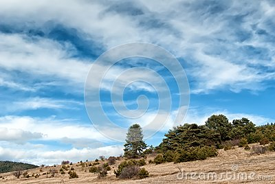 Blue Sky with Clouds, Meadow and Bushes