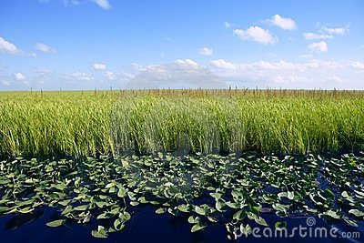 Blue sky in Florida Everglades wetlands