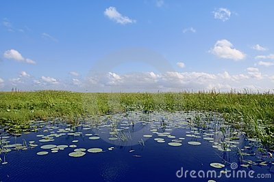 Blue sky in Florida Everglades wetlands green plan