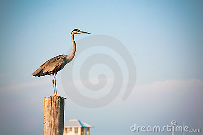 Blue Sky and Great Blue Heron