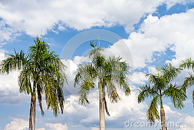 Blue sky and green palm tree background Stock Photo