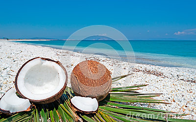 Blue sky over coconuts