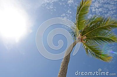 Blue Sky Palm