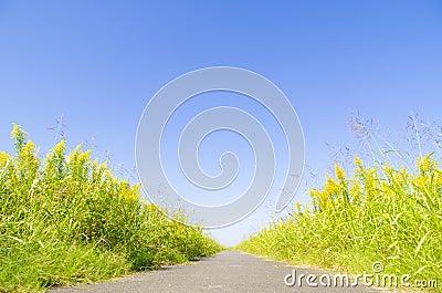 Blue sky and promenade