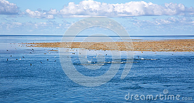 Blue sky sea clouds and coral reef with seagulls.