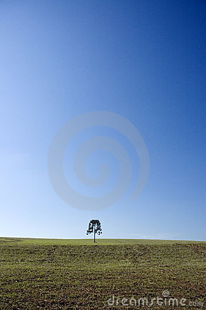 Blue sky with tree