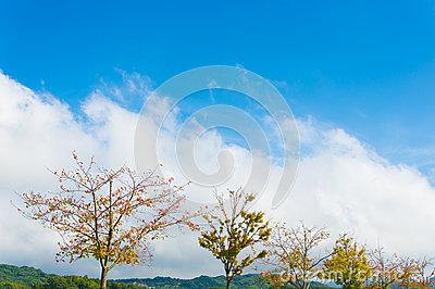 Blue sky and trees in autumn