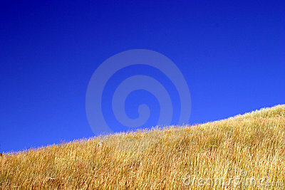 Blue Sky Yellow Grass