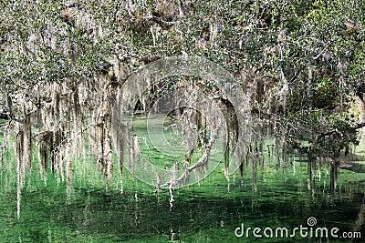 Blue Spring State Park, Florida, USA