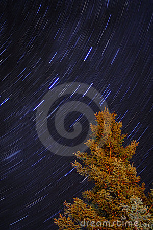 Blue Star Trails and Alaskan Spruce Tree at night