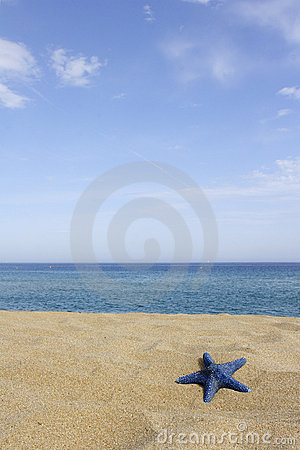 Blue starfish on empty beach,
