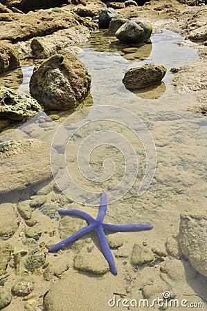 Blue starfish in the sea