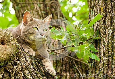 Blue tabby cat in a tree