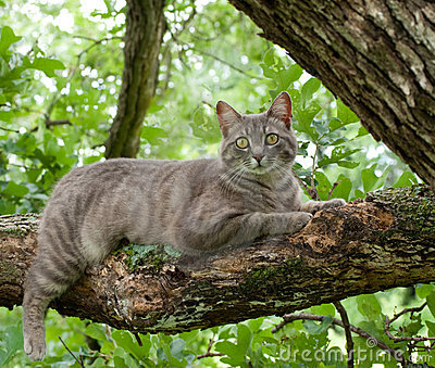 Blue tabby cat on tree branch