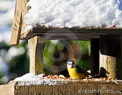 Blue-Tit at a snowy bird feeder