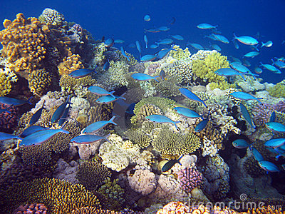 Blue Tropical Fishes Royalty Free Stock Photography - Image: 5743477
