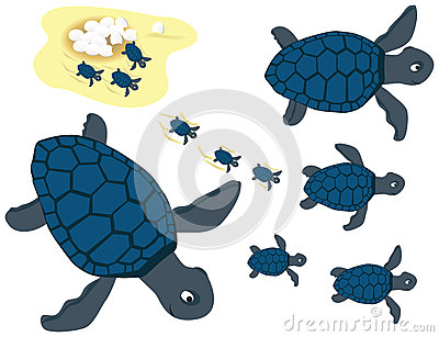 Blue turtles set