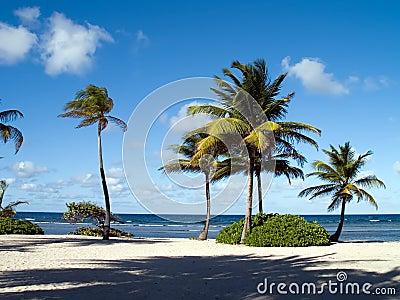 Blue Water Beautiful Palms