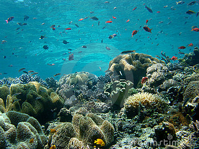 blue water coral reef stock photo image 574130