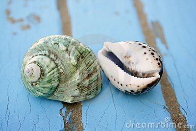 Blue wooden beach floor green sea shell