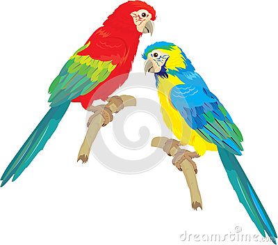 Blue Yellow and Red Blue Macaw parrots