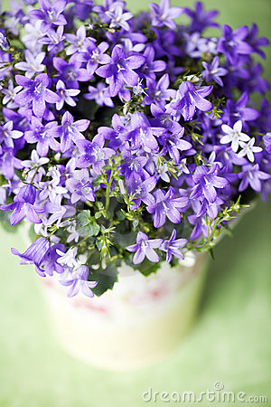 Free Bluebells Stock Photography - 18625022
