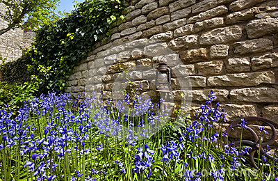 Bluebells - Old Stone Wall - England
