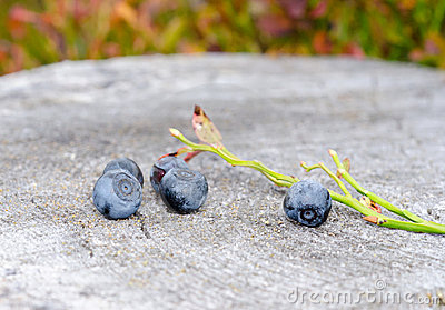 A blueberries