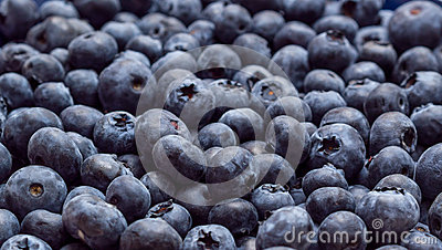 Blueberries background banner