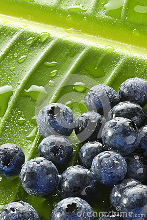 Blueberries Water Drops Leaf Background