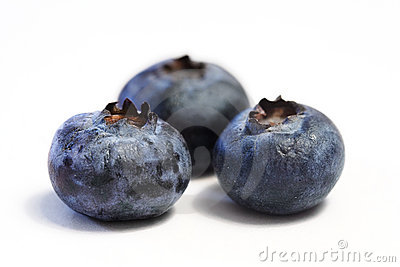 Blueberry Trio Macro